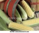 corn-cob-bushel_~662960
