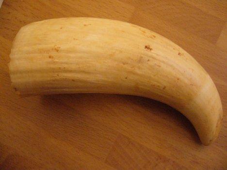 Selling sperm whale teeth legally