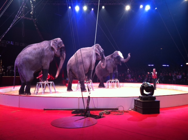 Swedish Circus Circus Scott Has Elephant Shows Action Is Going