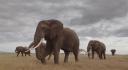 elefanter ma