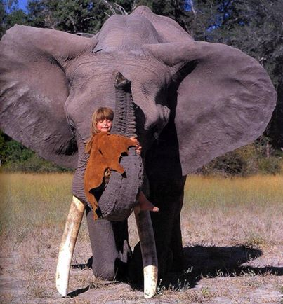 elephant harrassing