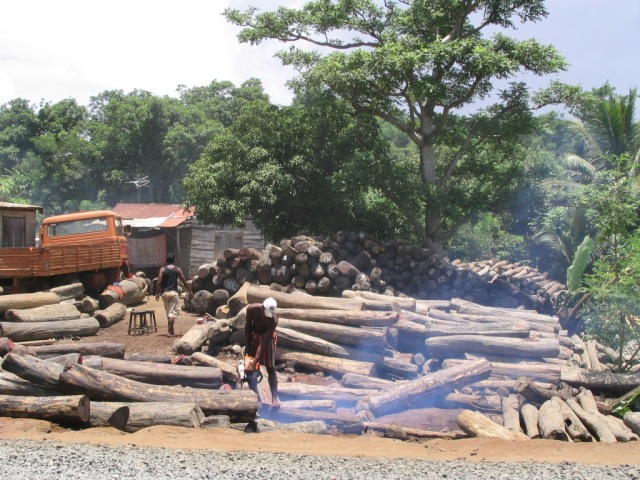 Illegal_export_of_rosewood_001