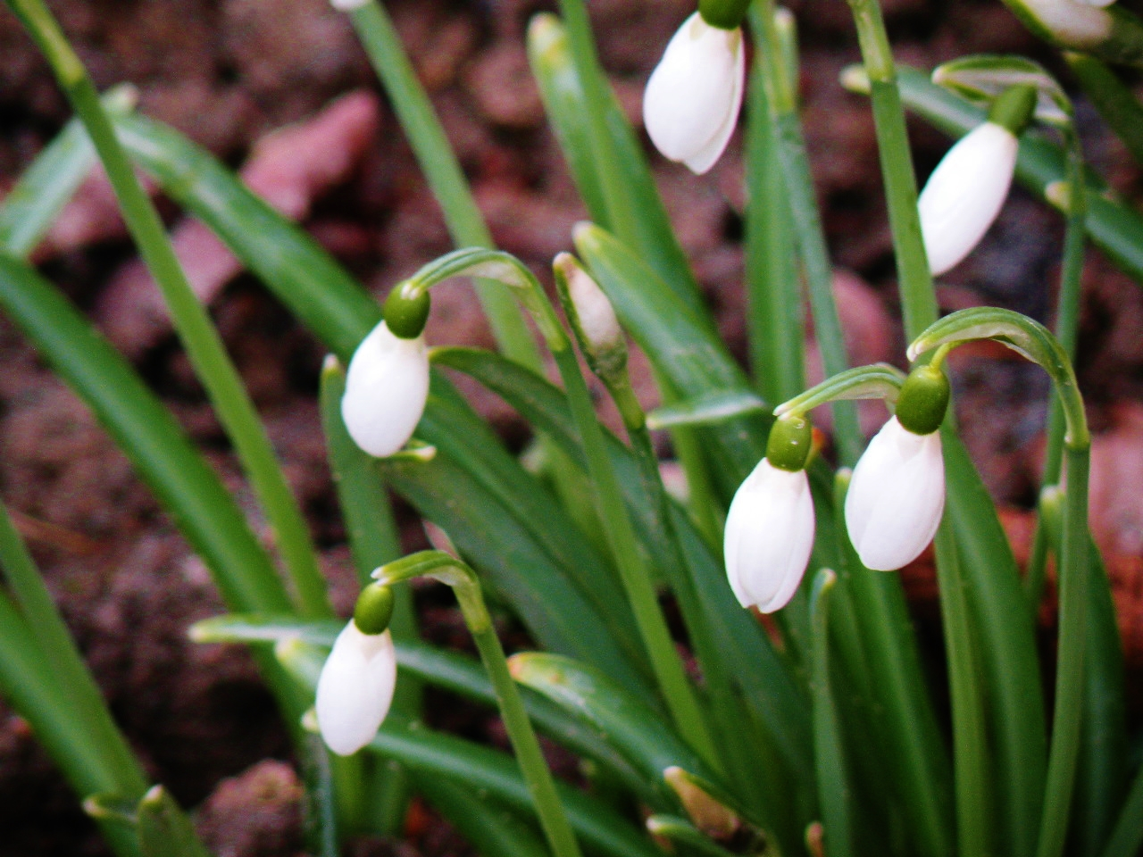 The First Spring Flowers In The Subarctic Ann Novek Luurewith