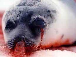 CRUEL SEAL HUNTING