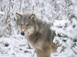 hunt 3