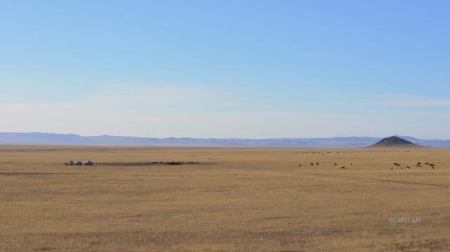gers & horses in big country n