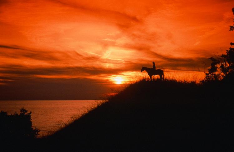 HorseSunset